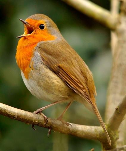 قطبنمای چشم پرنده